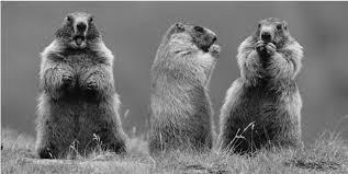 Le domaine des 3 marmottes